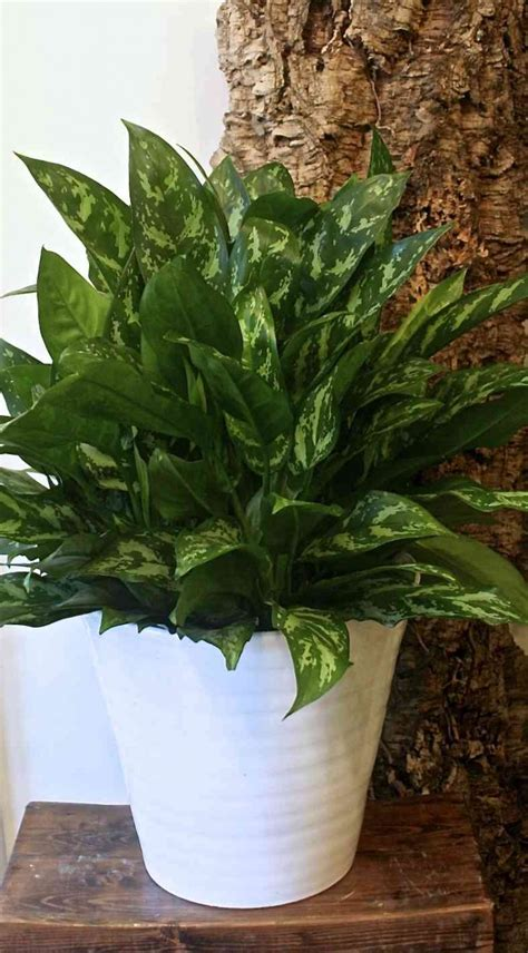 expert advice    maintenance houseplants gardenista