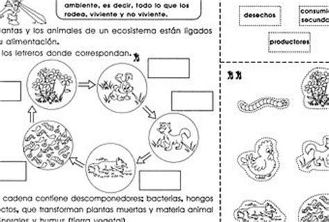 cadenas troficas interactivas cadenas alimenticias 3er grado paperblog