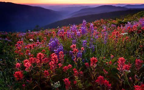 field flowers mountains fog sunset wallpaper