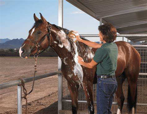how to get the most out of a small bedroom how to get the most out of your equine grooming products