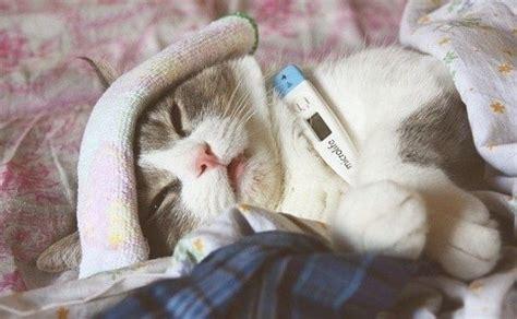 imagenes uñas gatos nikita yepez blog gatos enfermedades m 193 s comunes en los