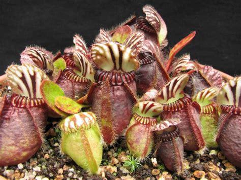 imagenes animales y plantas en peligro de extincion 7 fant 225 sticas plantas en peligro de extinci 243 n fotos