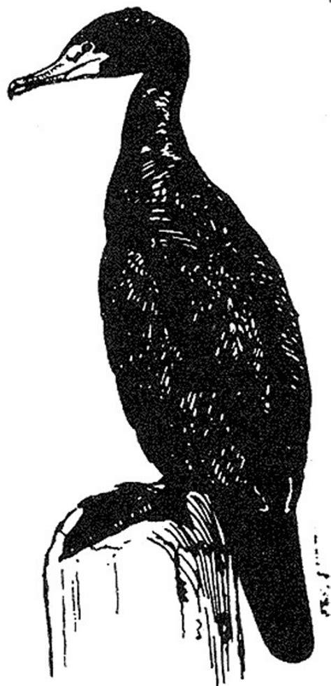 Free picture: black and white, line, art, cormorant, bird