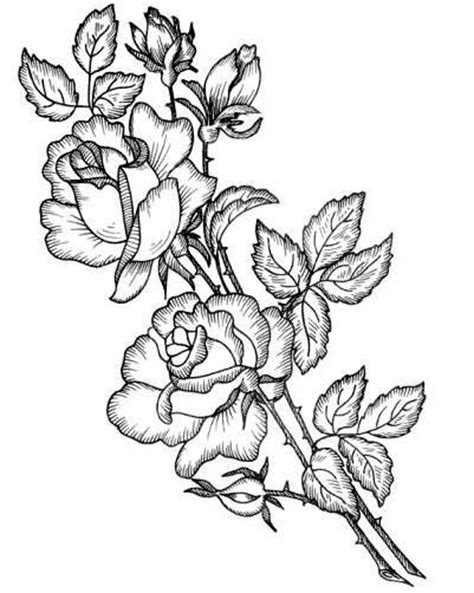 coloring pages of real roses 17 best images about printables flowers on pinterest