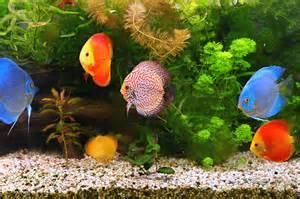 Fish S Fish Archives Petspot