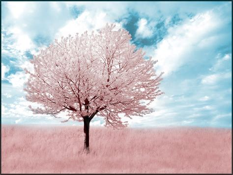 pink tree infrared by michilauke on deviantart
