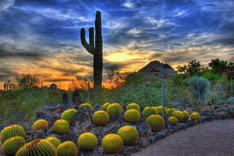 az desert botanical garden 20 things you need to before moving to