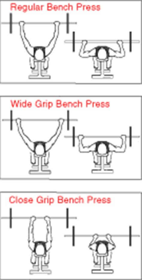 bench press hand width chest muscles