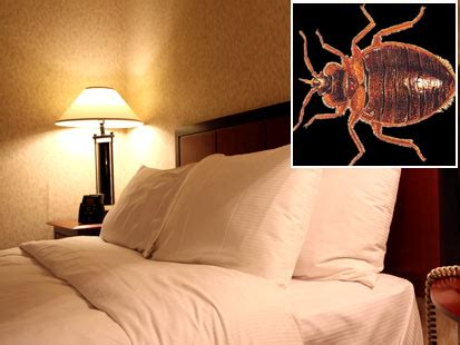 bed bugs in hotel room taking the bite out of bedbugs with a natural product we