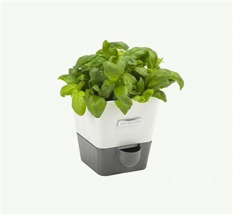 self watering indoor planters 30 indoor herb pots and planters to add flavor to any home
