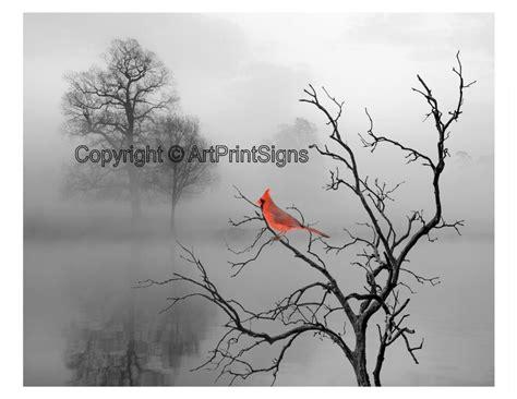bird home decor cardinal bird home decor wall photo print b w