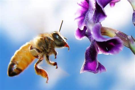 polline di fiori il polline altrasalute