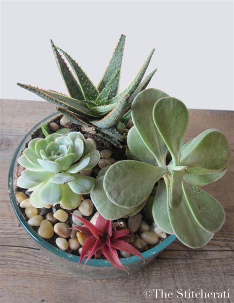 Indoor Succulent Planter by Diy Indoor Succulent Garden The Stitcheratithe Stitcherati