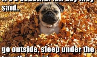 Autumn Memes - 7 funny fall memes to share on facebook that celebrate the