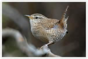 oiseaux des jardins vigie nature