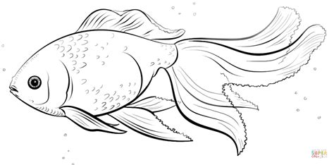 Oranda Goldfish Coloring Page Free Printable Coloring Pages Goldfish Coloring Pages