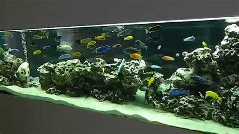 Aquarium V Ii 1200l malawi cichlids aquarium ii