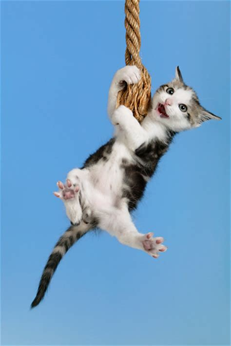 cat swinging on fan are the usos the new poster children of sticking it out