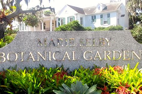 selby botanical garden selby botanical gardens sarasota fl review