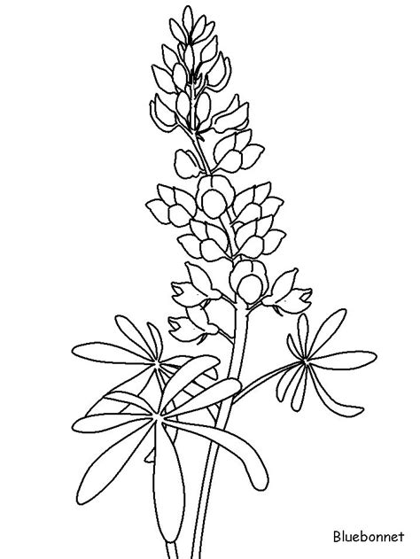 coloring pictures of wildflowers bluebonnet flowers coloring pages jpg 718 215 957