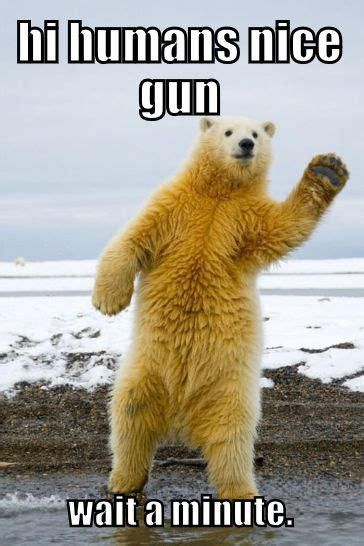 Dancing Polar Bear Meme - 73 best funny animal memes images on pinterest