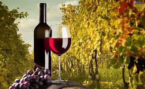 imagenes de uvas y copas vino