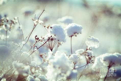 winter flowers winter flowers photograph by monika wisniewska