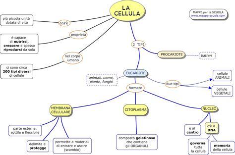 verifica guerre persiane scuola primaria mappe per la scuola la cellula eucariota e procariota