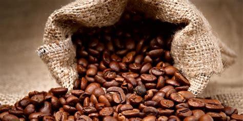 Kopi Arabika Gayo Mountain Kp11 kenali lebih dekat dengan kopi asli indonesia