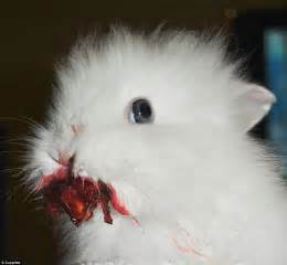 like a bunny that s berry scary photos of cute pets eating berries