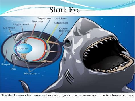 are sharks color blind amazing facts about our