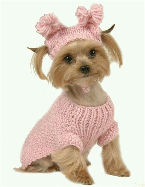 Benjour Sweater White Dogy Babyterry 46 best pc clothes images on animals puppies and dresses