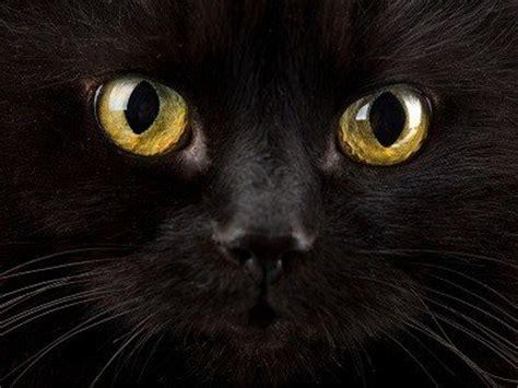 Bedeutung Schwarze by Bedeutung Und Wirkung Der Farbe Schwarz Viversum