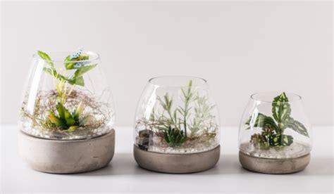 decorative glass pots decorative plant pots indoor diy table decoration clear