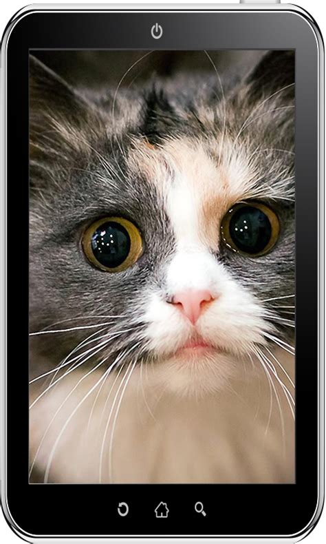 wallpaper cat android cute cat wallpaper hd android apps on google play