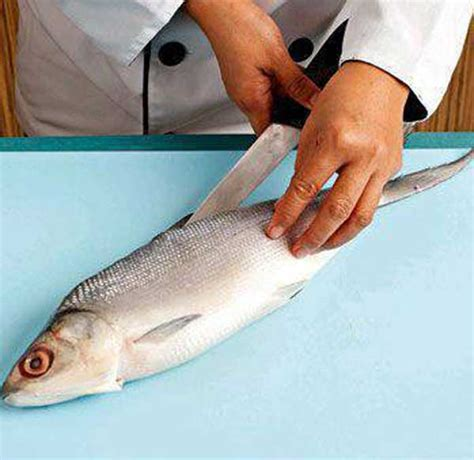cara membuat kolase ikan cara membuat nugget bandeng sehat rumah nugget