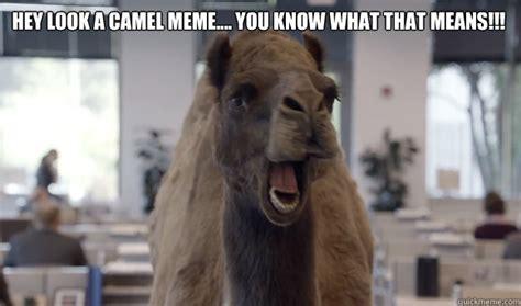 Camel Meme - hump day memes quickmeme