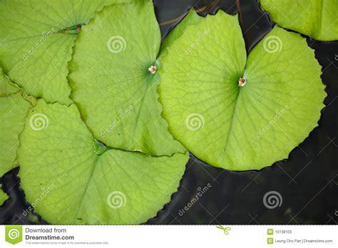 white lotus day spa point lotus leaf stock photos image 15138103
