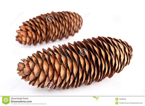Brown By Dreamcone Soflens cone royalty free stock photo image 10999635