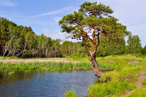 Landscape Pictures Of Trees Landscape With Pine Tree And Lake Free Stock Photo