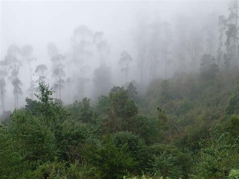 fog clipart fog clip hd wallpaper background images