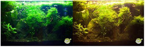 beleuchtung aquarium wie lange wie lange beleuchtung im aquarium 28 images meerwasser