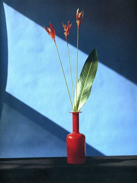 mapplethorpe fiori 25 best ideas about robert mapplethorpe on