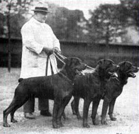 history of a rottweiler historic photographs of rottweilers dating back 1907 historic rottweiler pictures