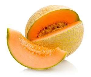 cantaloupe for dogs fruits and vegetables for dogs the top 17