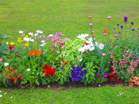 fiori per aiuole estive annuali per l estate chic shock mimma pallavicini s weblog