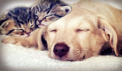 walker cost pet sitter cost and walker cost pet sitters ireland
