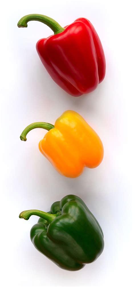 bell pepper wikipedia