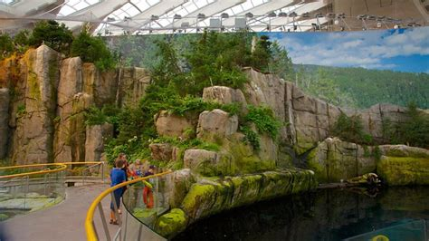 house insurance montreal montreal biodome in montreal quebec expedia ca