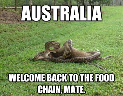 Funny Australia Day Memes - busy